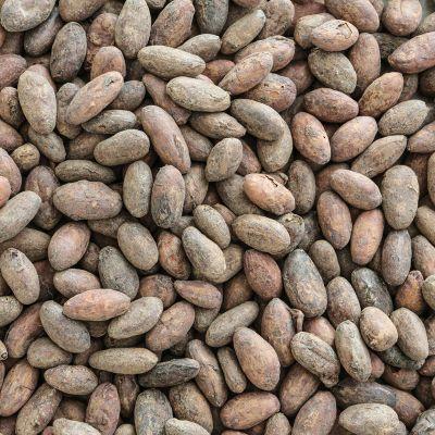 Biologische cacaobonen